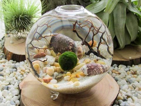 12-maneras-hermosas-de-tener-plantas-de-interior-acuario-lleno
