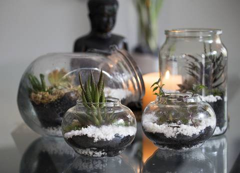 12-maneras-hermosas-de-tener-plantas-de-interior-acuario-vacio