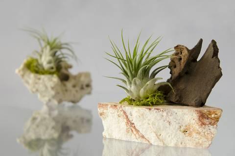 12-maneras-hermosas-de-tener-plantas-de-interior-aereas-o-roca