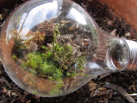12-maneras-hermosas-de-tener-plantas-de-interior-bombilla
