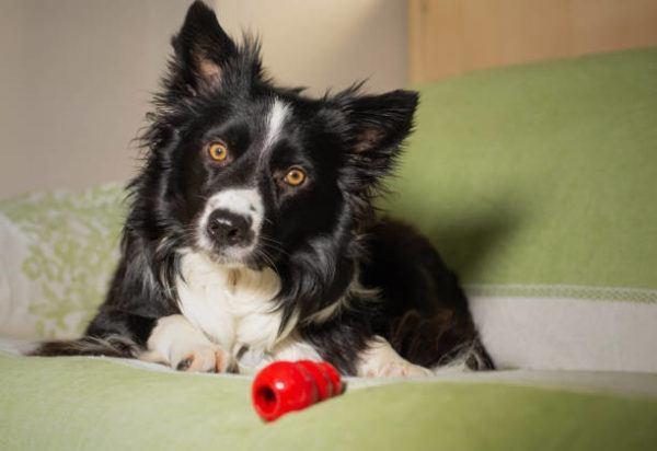 Juguetes para perros puppy kong casero