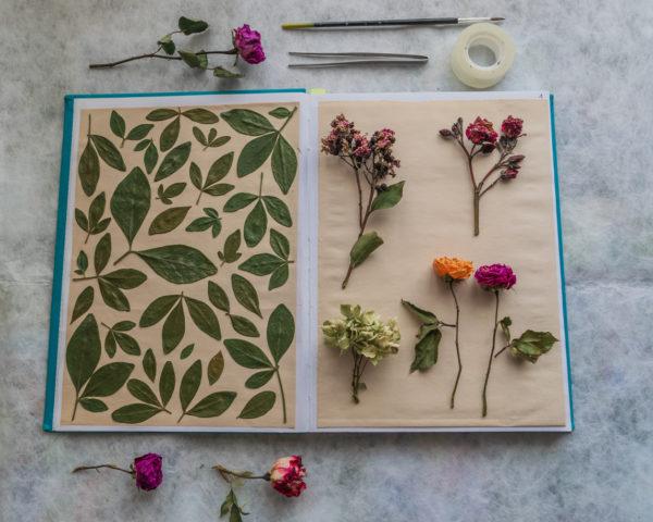 Ideas manualidades con rosas secas libro