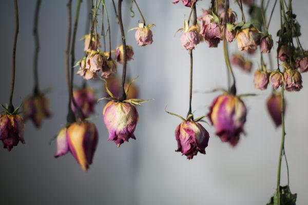 Ideas manualidads con rosas secas conservacion