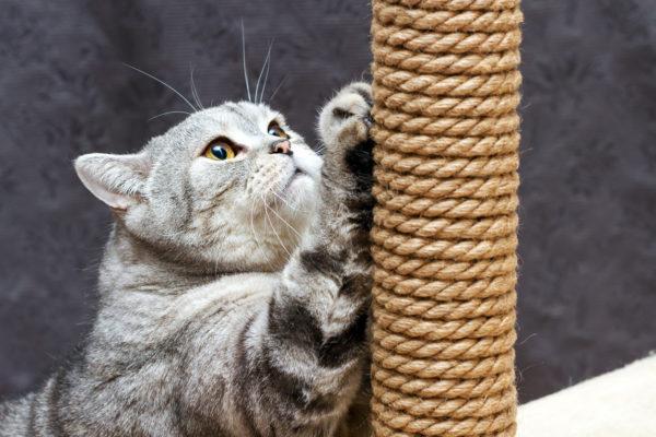 Mejores manualidades dia internacional gato RASPADOR