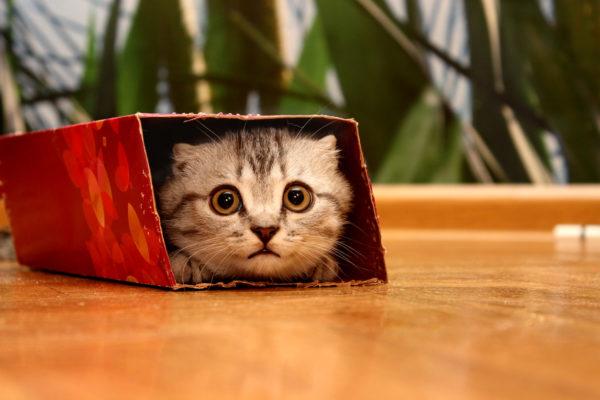Mejores manualidades dia internacional gato caja