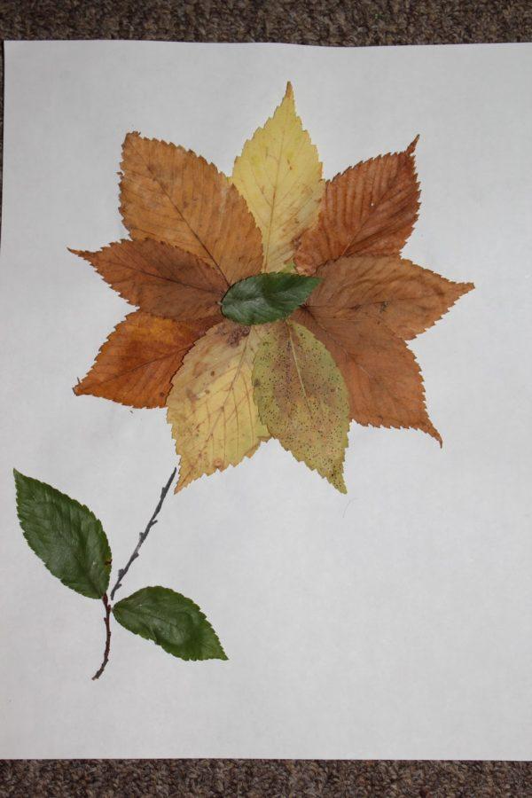 20 ideas para hacer manualidades con hojas secas de los árboles flor