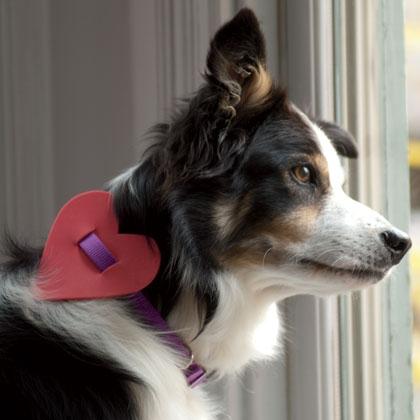 collar-perro