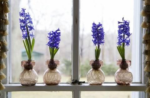 12-maneras-hermosas-de-tener-plantas-de-interior-bulbo-artificial