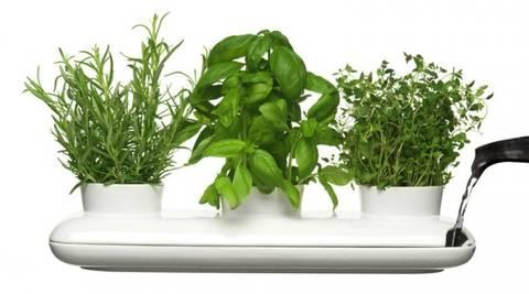 12-maneras-hermosas-de-tener-plantas-de-interior-hierbas-aromaticas