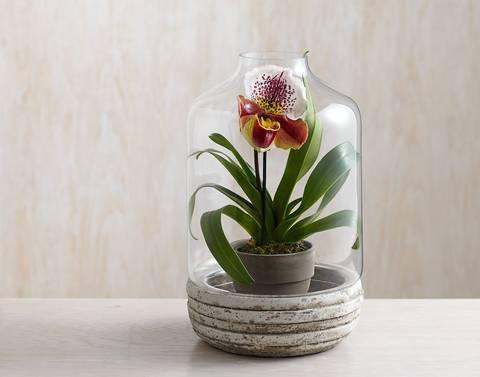 12-maneras-hermosas-de-tener-plantas-de-interior-jarron