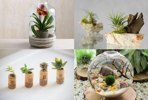 12-maneras-hermosas-de-tener-plantas-de-interior