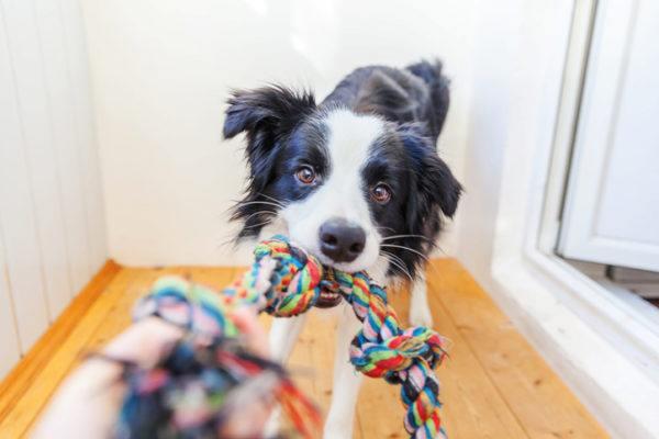 Juguetes caseros perros