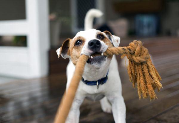 Juguetes perro caseros